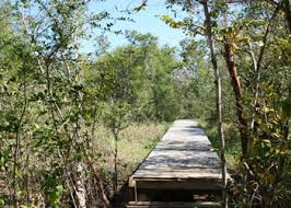 Photo of Mastic Trail courtesy of CruiseTimetables.com