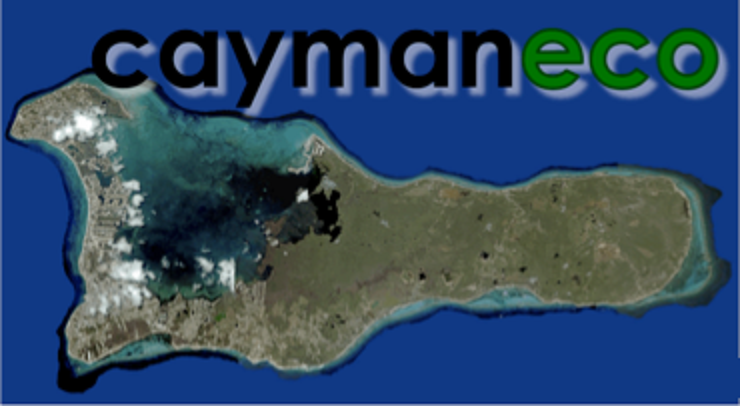 Cayman Eco Beyond Cayman Peatland Drainage In Southeast